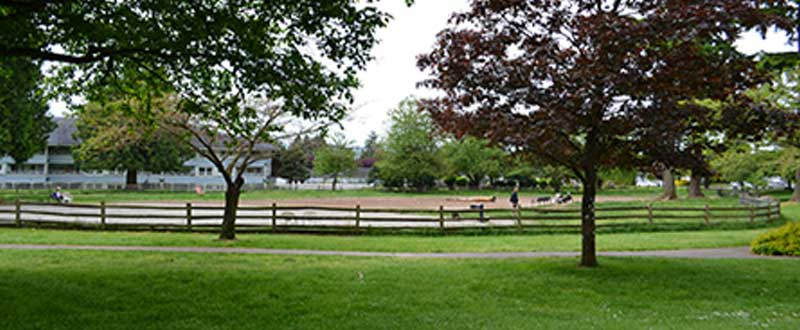 David Gray Park - Off Leash Dog Parks Burnaby